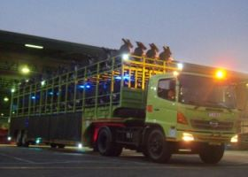 Gallery   3b_our_service_motor_carrier_mt_motor_carrier_services_7_350x250